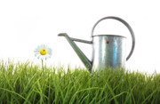 Beginnings Prints - Old watering can in grass with white Print by Sandra Cunningham