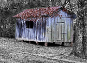 Shed Prints - Old Weathered Shed Print by Betty LaRue