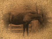Pastureland Prints - Old West Horse Print by Debra     Vatalaro