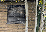 Cabin Wall Photos - Old Window And Aspen by James Steele