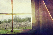 Barn Art - Old window looking out to apple orchard by Sandra Cunningham