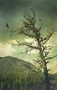 Sandra Cunningham - Old withered tree in the forest