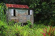 Wooden House Framed Prints - Old Wooden House-St Lucia Framed Print by Chester Williams