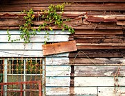 Window Bars Prints - Old Wooden Shack Print by Yali Shi