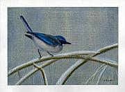 Watercolors Pastels Originals - Old World Jay by Lori  Presthus