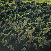 Landscape - Olive Farmland in Spain by Heiko Koehrer-Wagner