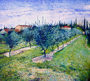 Enver Larney - Olive Grove at Graveson...