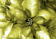 Shimmer Prints - Olive Shimmer Print by DigiArt Diaries by Vicky Browning