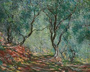 Olive Green Painting Prints - Olive Trees in the Moreno Garden Print by Claude Monet