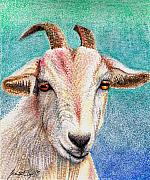 Goat Drawings - Olivia the Goat by Scarlett Royal