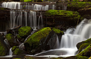 Olympic National Park Prints - Olympics Gentle Stream Print by Mike Reid