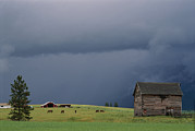 Farming Barns Prints - Ominous Clouds Gather Over Horses Print by Annie Griffiths