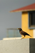 Vishakha Photos - On a lookout by Vishakha Bhagat