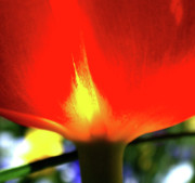 Flower Design Photos - On Fire by Rona Black