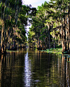Caddo Framed Prints - On Golden Canal Framed Print by Lana Trussell