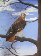 Red-tailed Hawk Paintings - On Guard by John Nickerson