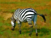 Roberto Edmanson-harrison Paintings - On Safari - Zebra by Roberto Edmanson-Harrison
