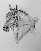 Thoroughbred Drawings - On The Bit by Donna Teleis