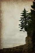 Port Renfrew Prints - On the Bluff Print by Marilyn Wilson