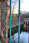 Charles River Photo Prints - On the Fence Print by JC Findley