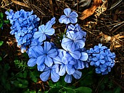 Florida Flowers Photos - On the Forest Floor by Julie Dant
