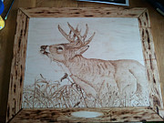 Buck Pyrography Prints - On The Hunt Whitetail Buck Print by Angel Abbs-Portice