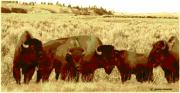 Bison Digital Art - On The Move ... Montana Art Photo by GiselaSchneider MontanaArtist