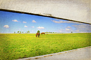 Kentucky Horse Park Framed Prints - On the other Side Framed Print by Darren Fisher