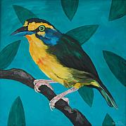 New Orleans Oil Paintings - On the outside looking in  slaty capped shrike vireo by Jason DuMouchel