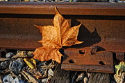 Autumn Leaf Posters - On The Rail Poster by Pamela Baker