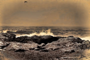 Photographic Art For Sale Photos - On the Rocks by Tom Prendergast
