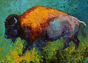 Bulls Painting Framed Prints - On The Run - Bison Framed Print by Marion Rose