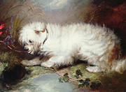 White Dog Metal Prints - On the Watch Metal Print by George Armfield