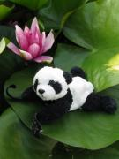 Travelling Panda Prints - On the waterlily Print by Ausra Paulauskaite