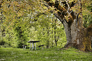 Big Tree Photos - Once Upon a Picnic by Bonnie Bruno