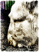Donkey Digital Art Metal Prints - One cant complain said Eeyore Metal Print by Steve Taylor