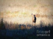 Sycamore Grove Park Prints - One Cute Deer Print by Carol Groenen