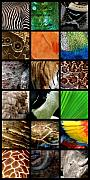 Grid Posters - One Day at the Zoo Poster by Michelle Calkins