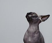 Naked Cat Prints - One eye one ear Print by Waldek Dabrowski