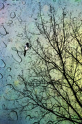 Isolated Digital Art Prints - One for Sorrow Print by John Edwards