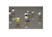 Beach Photograph Mixed Media Posters - One Good Tern... Poster by Jane Melgaard