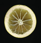 Grapefruit Photo Framed Prints - One Half Of An Eaten Grapefruit Framed Print by Thomas J Peterson