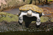 Critter Photos - One Handsome Turtle by Suzanne Gaff