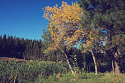 Aspen Fall Colors Photos - One in a Million by Laurie Search