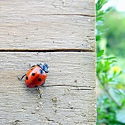 Insect Photos - One Little Ladybird by Iain Carter
