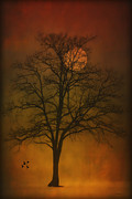 Art In Acrylic Photo Framed Prints - One Lonely Tree Framed Print by Tom York
