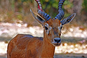 Saurabh  Singh - One lovely deer