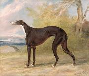 Greyhound Art - One of George Lane Foxs Winning  by George Garrard