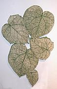 Organic Ceramics Originals - One piece leaf arrangement by Janet Wyndham-Quin