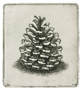 Drypoint Mixed Media - One Pinecone by Charles Harden
